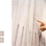 seagull-new-single-album-2010